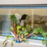 Greendow Vertical Window Garden gd 008 150x150