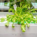 Greendow Vertical Window Garden gd 009 150x150