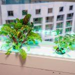 Greendow Vertical Window Garden gd 011 150x150